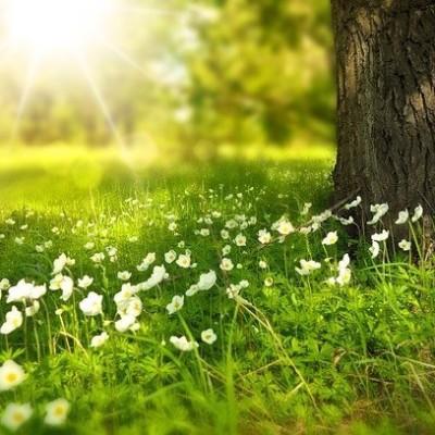 Entwicklung im Einklang mit der Natur
